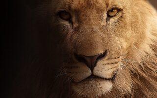 leeuw van Daniël, afbeelding bij de sessies bijbelstudie over Daniël