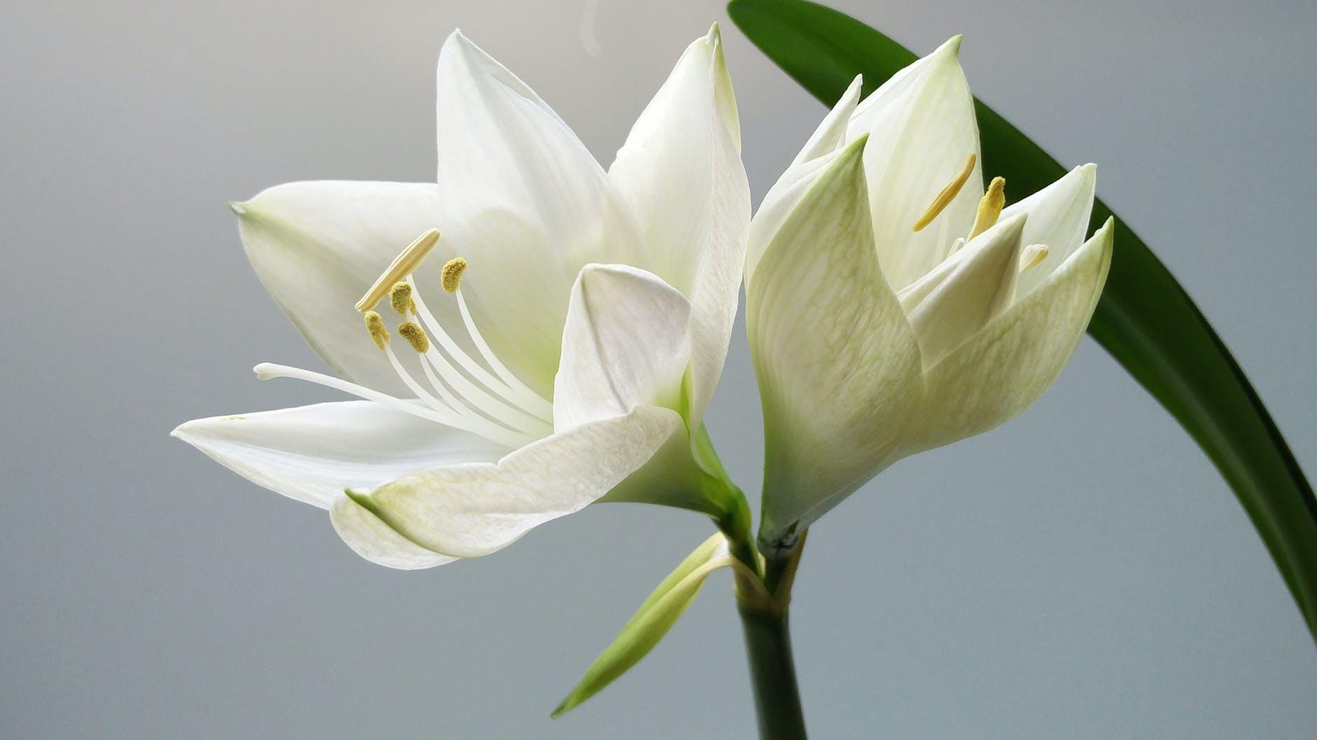 nature plant white flower