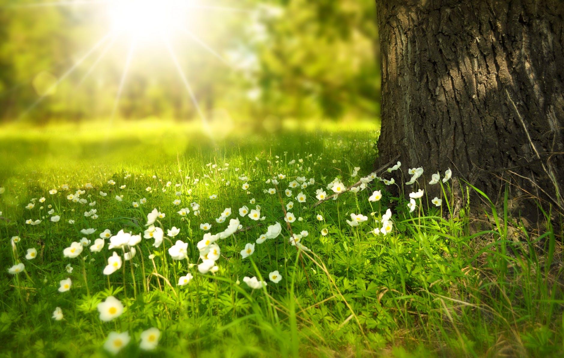 zon in de christelijke liederen