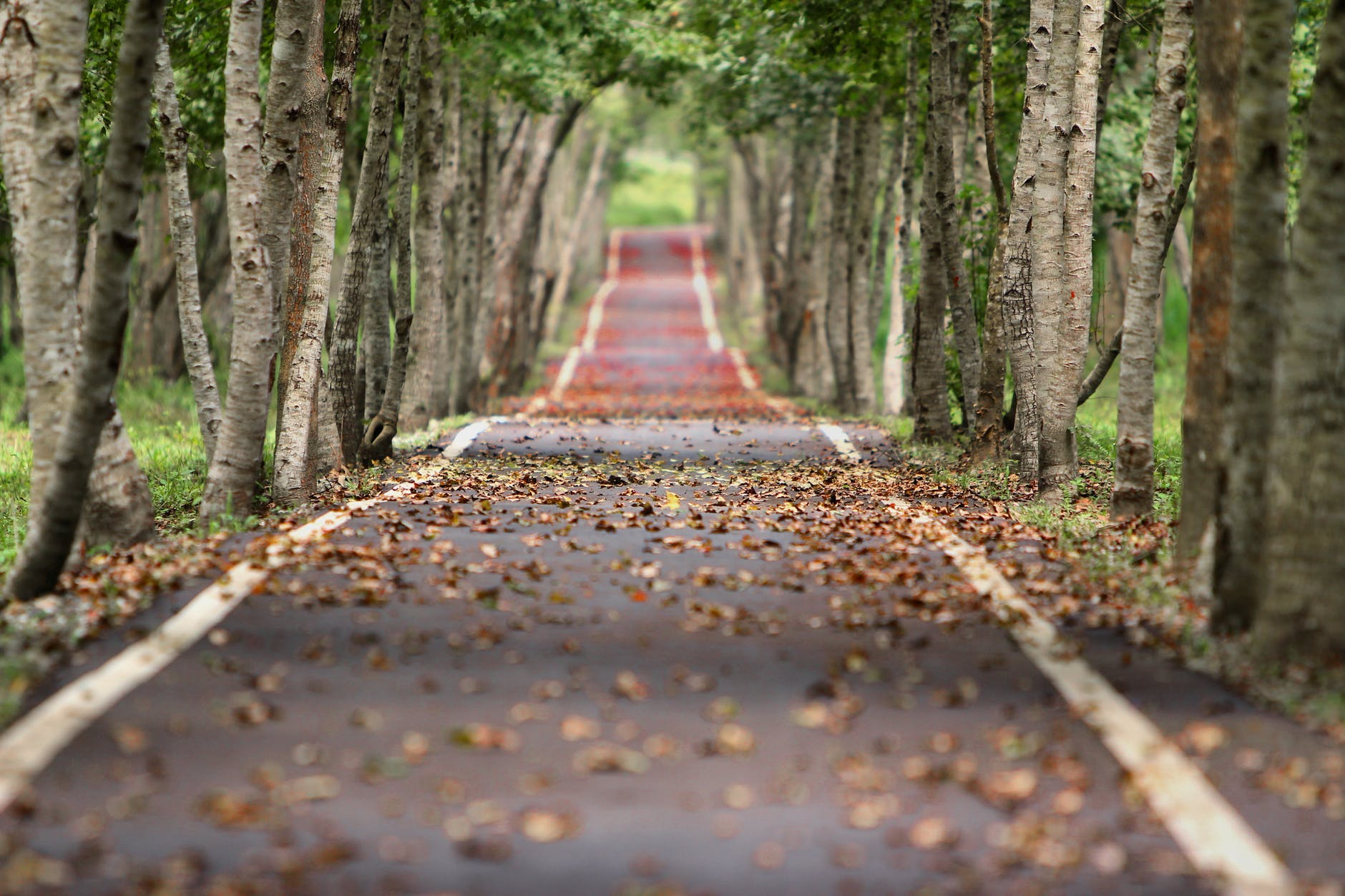 empty road between trees