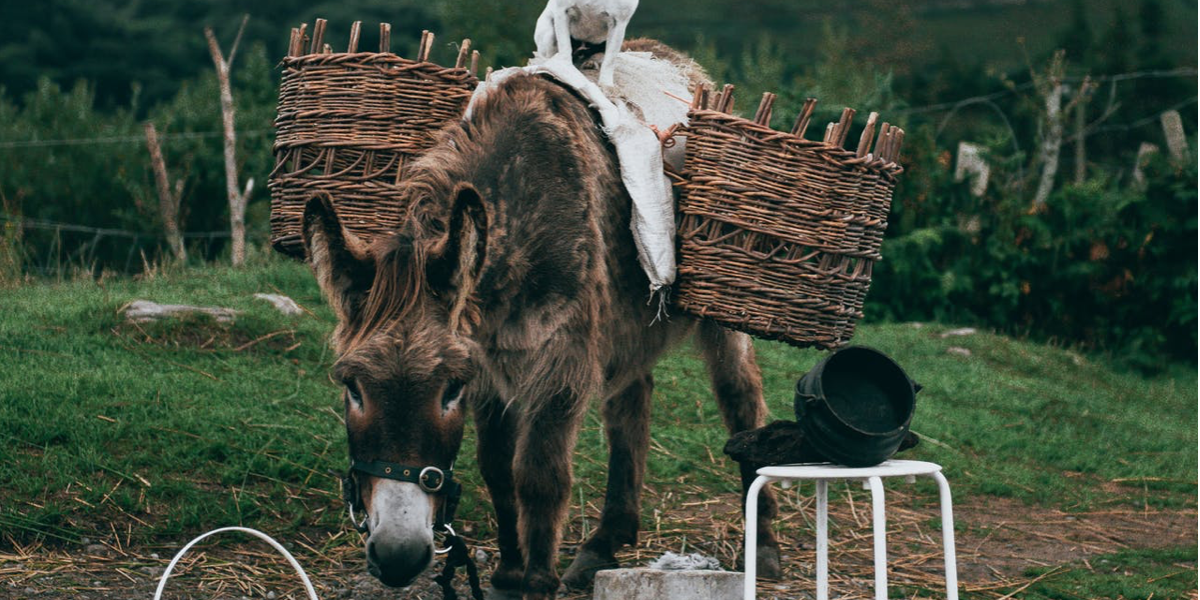 ezel en dieren Lukas 19